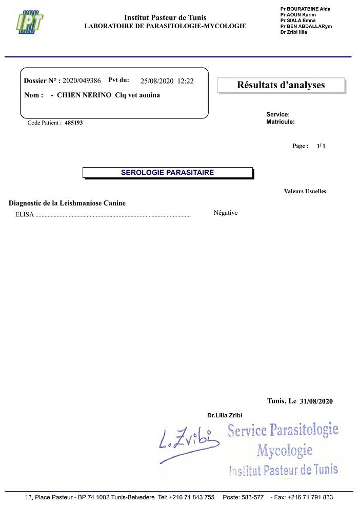 NERINO, identifié 977.200.007.631.749, croisé noir et blanc Nerino28