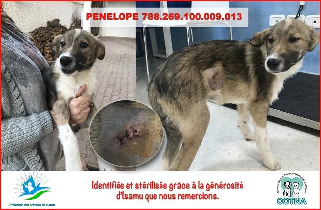 JANVIER 2019 : Aide pour stériliser 6 chiens femelle du refuge de la PAT Penelo17