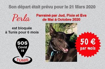 Pandémie COVID19 - Nos protégés bloqués à Tunis - Page 2 Perla_16