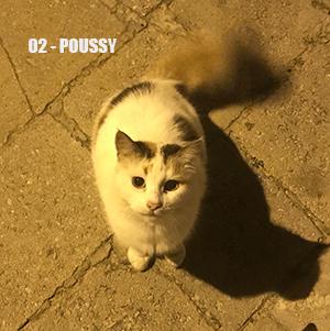 Campagne stérilisation des chats errants - Tunisie 2020 Poussy10