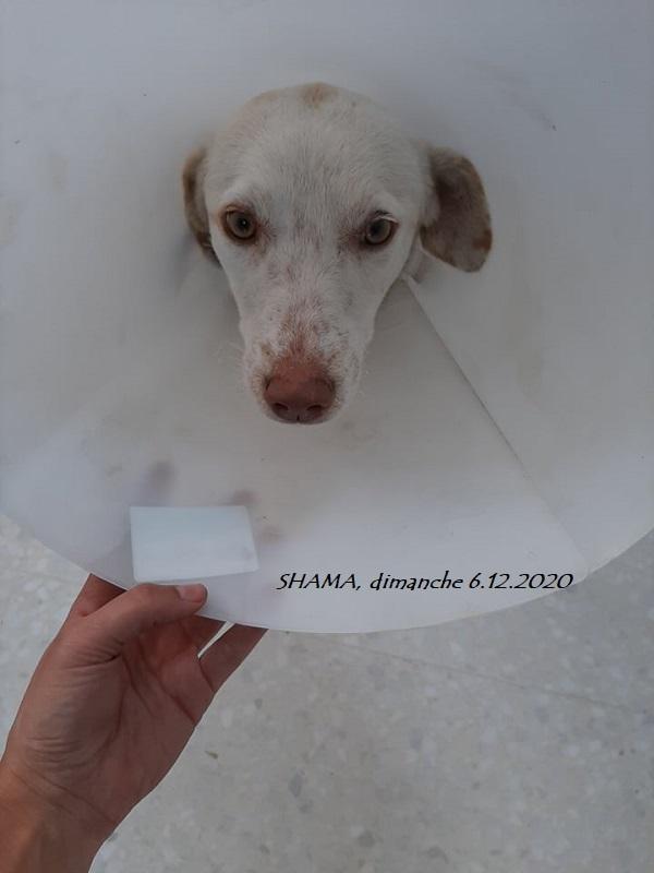 SHAMA, brulée vive (incendie à Sidi Thabet du 2.12.2020) Shama_14