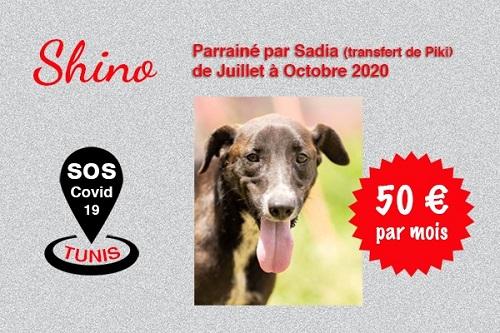 Pandémie COVID19 - Nos protégés bloqués à Tunis - Page 2 Shino_20