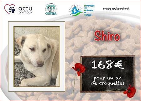 Collecte alimentaire pour les animaux du refuge PAT Shiro_12