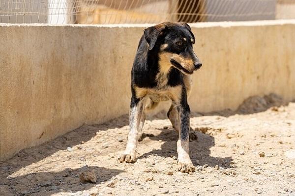 VIOLETTE, identifiée 941.000.023.236.592, en refuge à Tunis Skz01858
