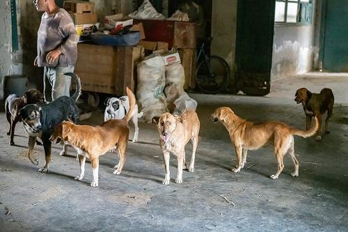 Les chiens de l'Usine de DEN-DEN Skz04210