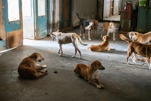 Les chiens de l'Usine de DEN-DEN Skz04211