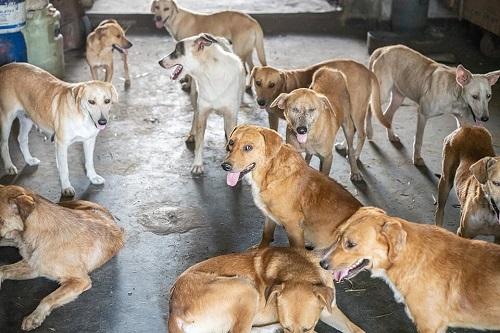 Les chiens de l'Usine de DEN-DEN Skz04212