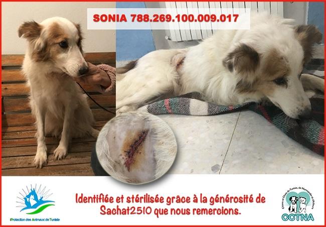 JANVIER 2019 : Aide pour stériliser 6 chiens femelle du refuge de la PAT Soniam10