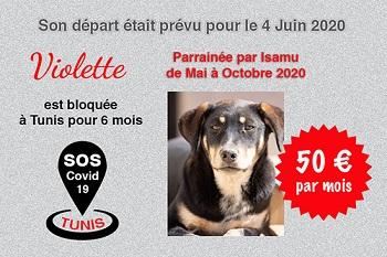 Pandémie COVID19 - Nos protégés bloqués à Tunis - Page 2 Violet40