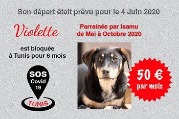 Pandémie COVID19 - Nos protégés bloqués à Tunis - Page 2 Violet42