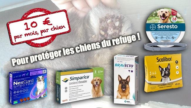 """Campagne """"antiparasitaire"""" pour les chiens du refuge PAT Visuel15"""