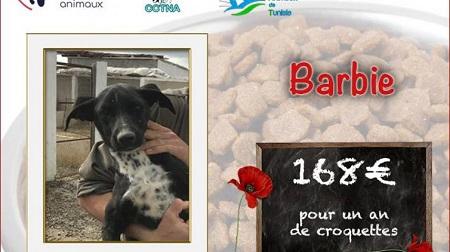 Collecte alimentaire pour les animaux du refuge PAT Visuel25