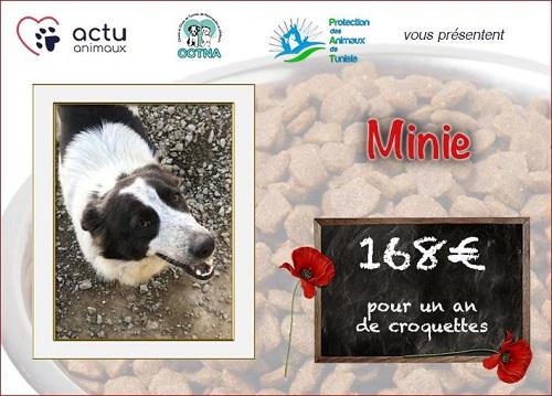 Collecte alimentaire pour les animaux du refuge PAT Visuel34