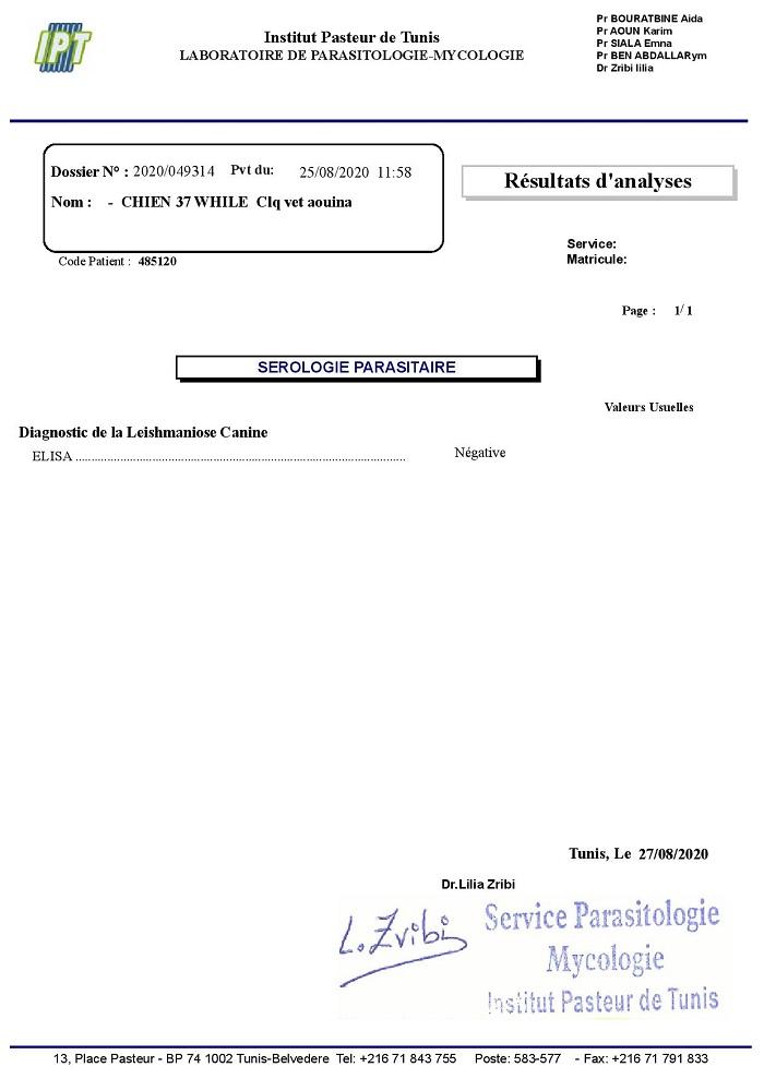 WHITE, identifiée 941.000.016.728.947, en pension en Normandie : réservée White_50