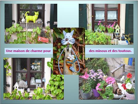 Aides du Luxembourg en faveur des chiens CCTNA de Djerba Yvette13