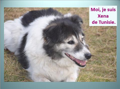 Aides du Luxembourg en faveur des chiens CCTNA de Djerba Yvette14