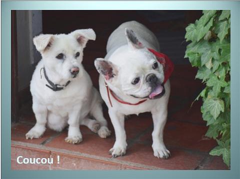 Aides du Luxembourg en faveur des chiens CCTNA de Djerba Yvette15