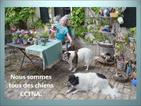 Aides du Luxembourg en faveur des chiens CCTNA de Djerba Yvette16