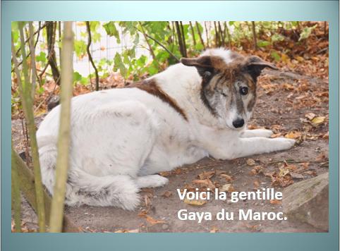 Aides du Luxembourg en faveur des chiens CCTNA de Djerba Yvette17