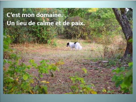 Aides du Luxembourg en faveur des chiens CCTNA de Djerba Yvette18