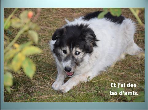 Aides du Luxembourg en faveur des chiens CCTNA de Djerba Yvette19