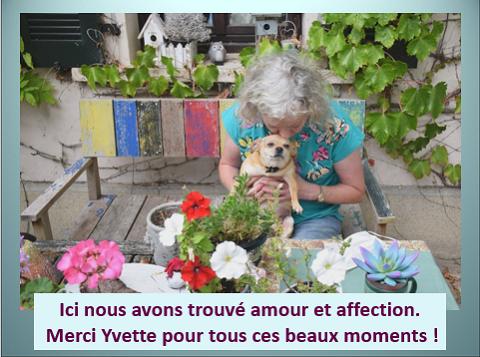 Aides du Luxembourg en faveur des chiens CCTNA de Djerba Yvette20