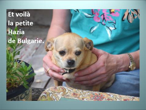 Aides du Luxembourg en faveur des chiens CCTNA de Djerba Yvette21