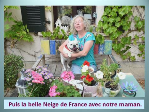 Aides du Luxembourg en faveur des chiens CCTNA de Djerba Yvette22