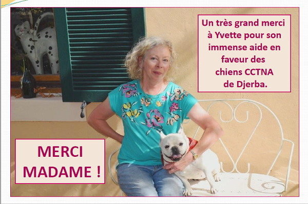 Informations concernant les chiens rescapés de Djerba Yvette23