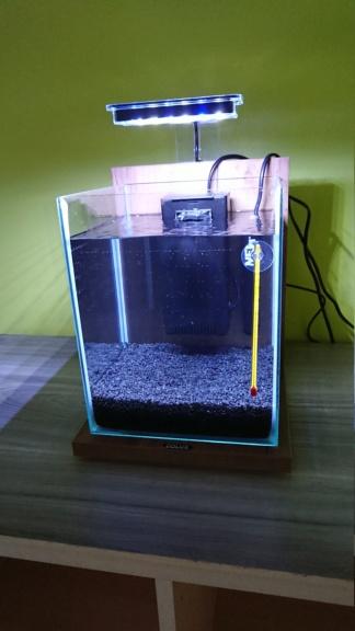 Achat aquarium 10L Dsc_0911