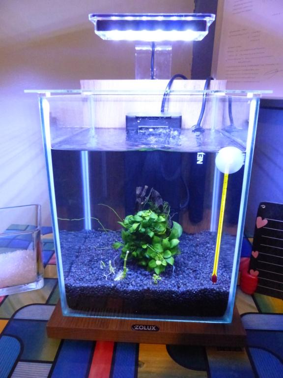 Achat aquarium 10L P1050110