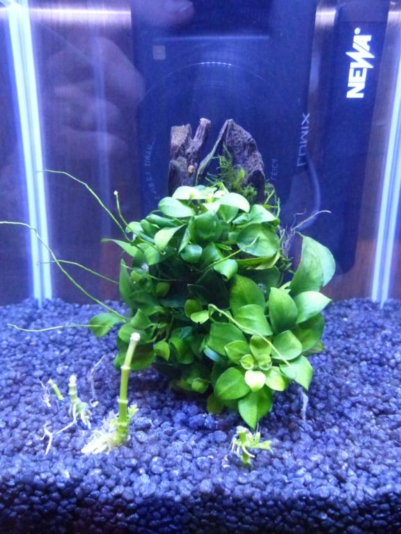 Achat aquarium 10L P1050111