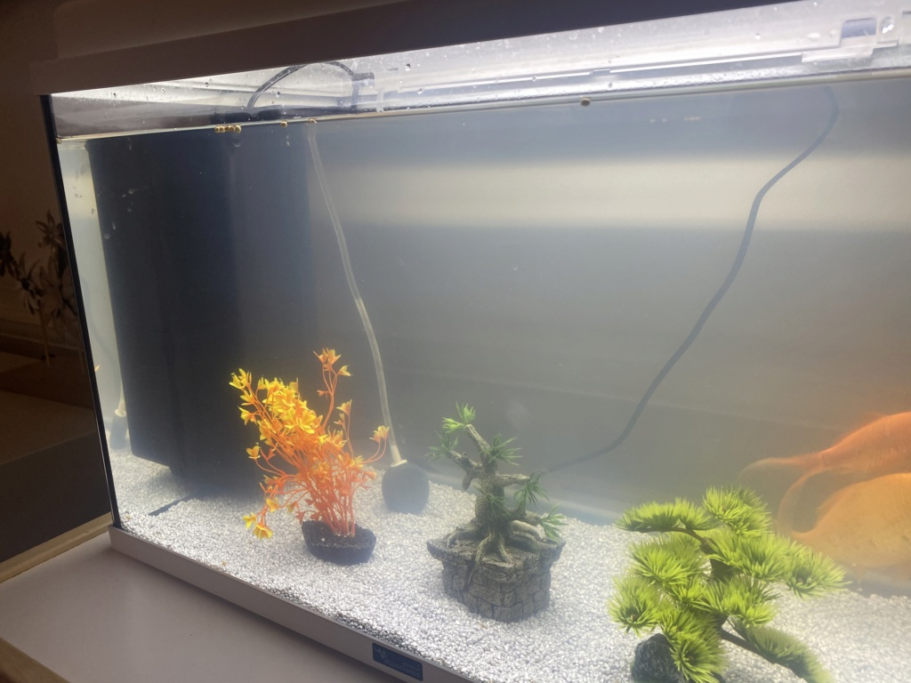 Souci eau nouvel aquarium 55L 2020-010