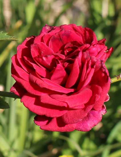 'Red Parfum' !!! - Page 2 05042011