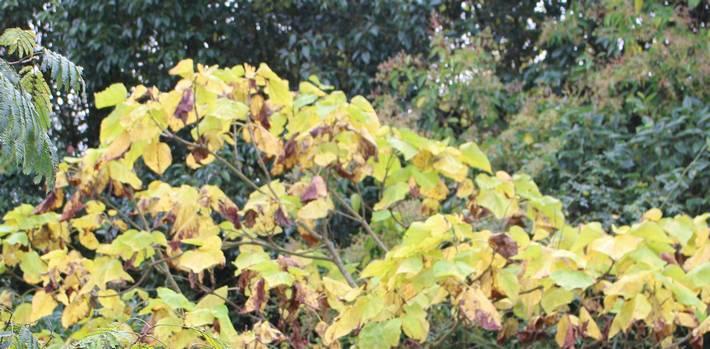 L'automne ! 19102012