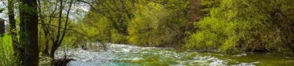 Les rives boisées