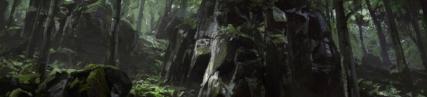 La forêt humide