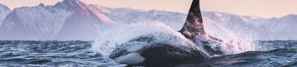 La baie des orques