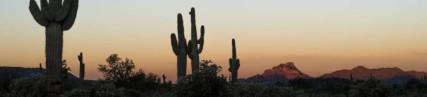 La vallée des cactus