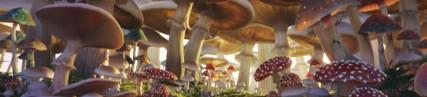 Les champignons géants