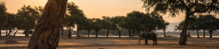 les rives arides