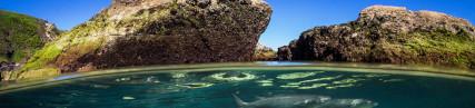 Les rochers d'algues