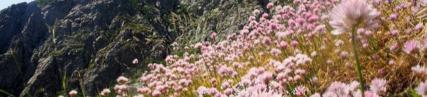 Les pentes fleuries