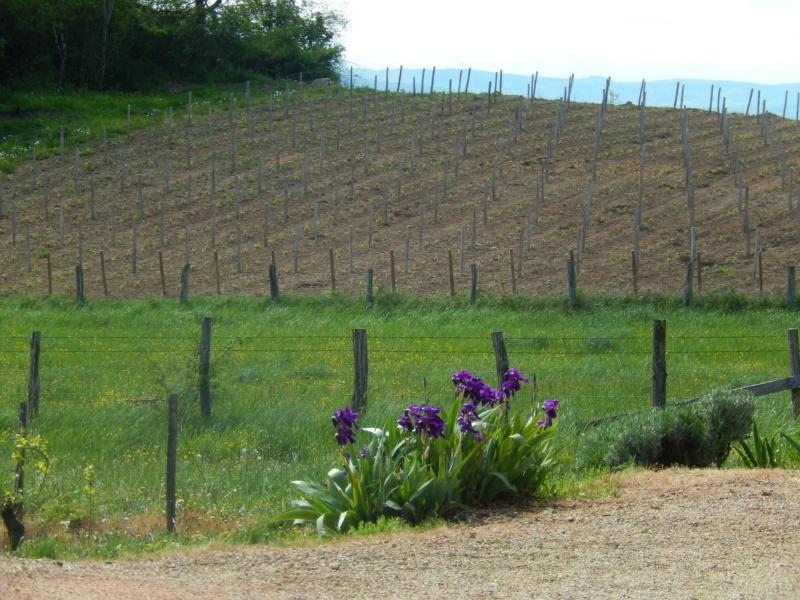 Picnic vignes à l'Echelette Dimanche 23 septembre - De 11H à 16H Pm210