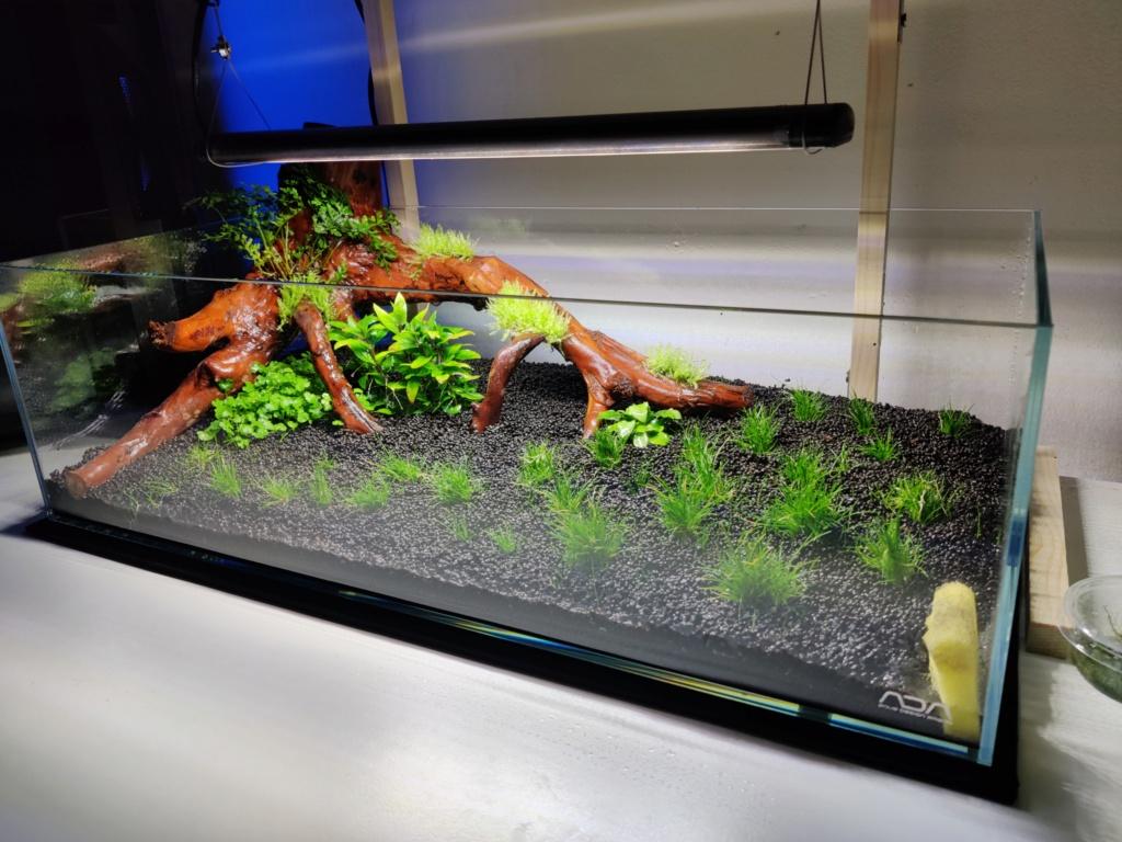 Ada cube garden 60F Drystart Img_2065
