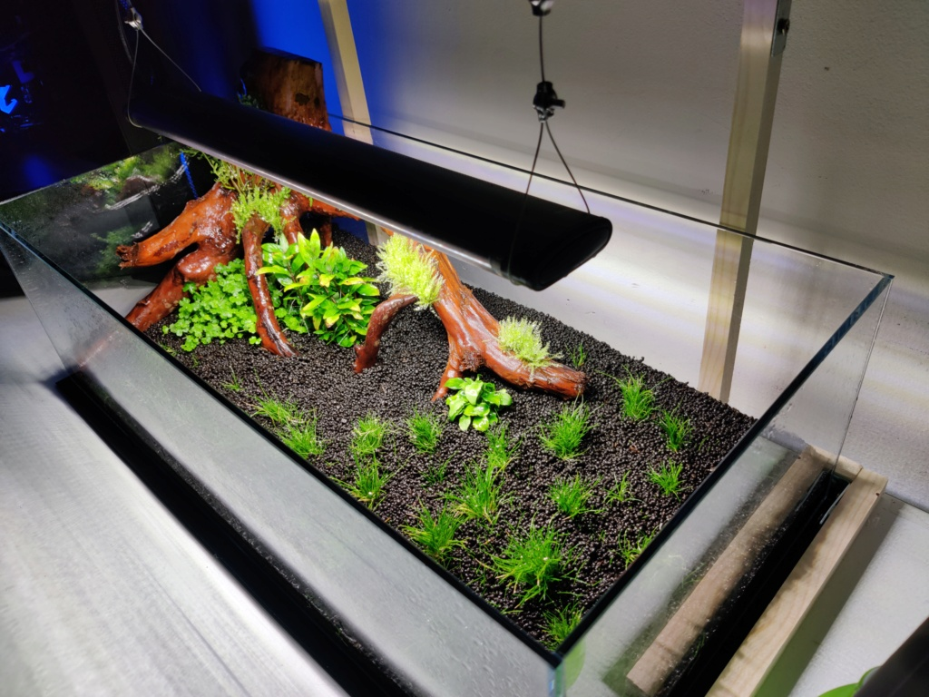 Ada cube garden 60F Drystart Img_2067