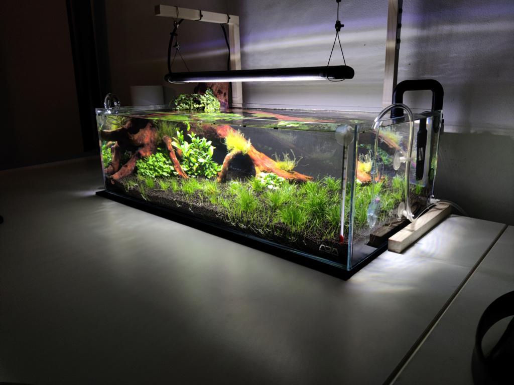 Ada cube garden 60F Drystart Img_2074