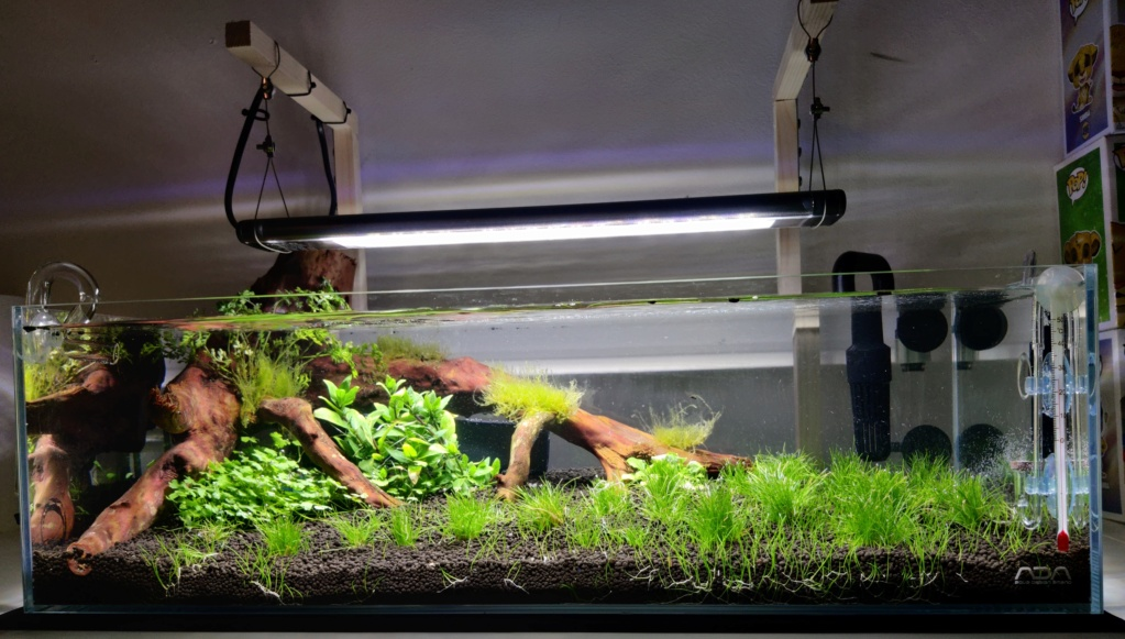Ada cube garden 60F Drystart Img_2075