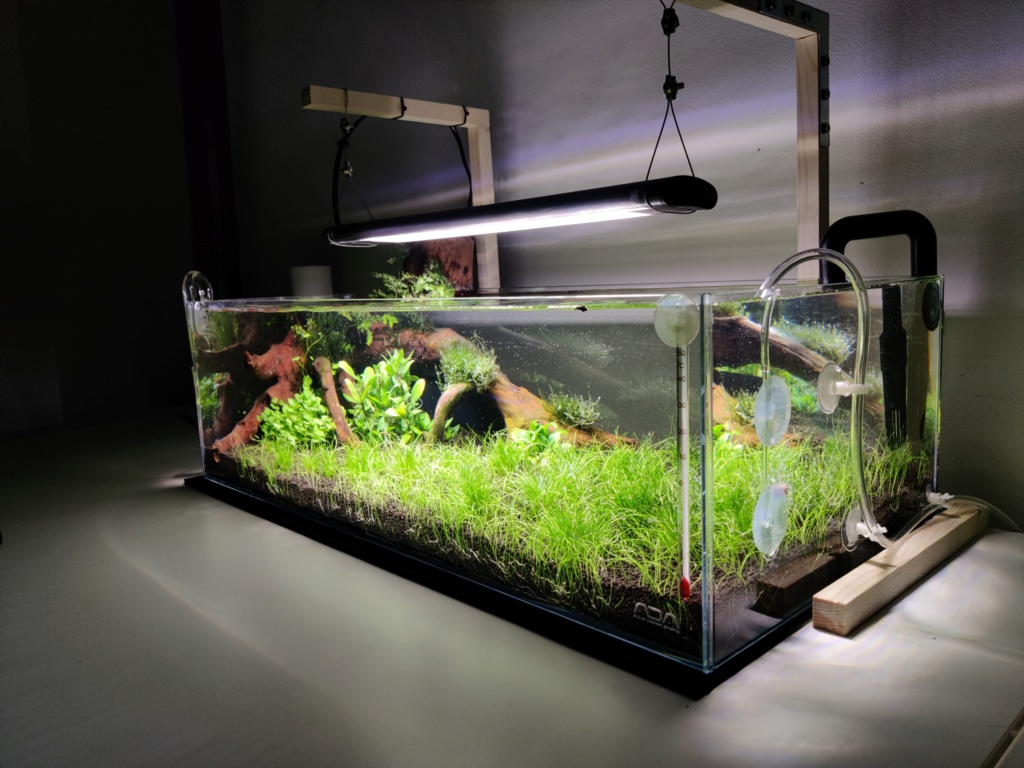 Ada cube garden 60F Drystart Img_2079