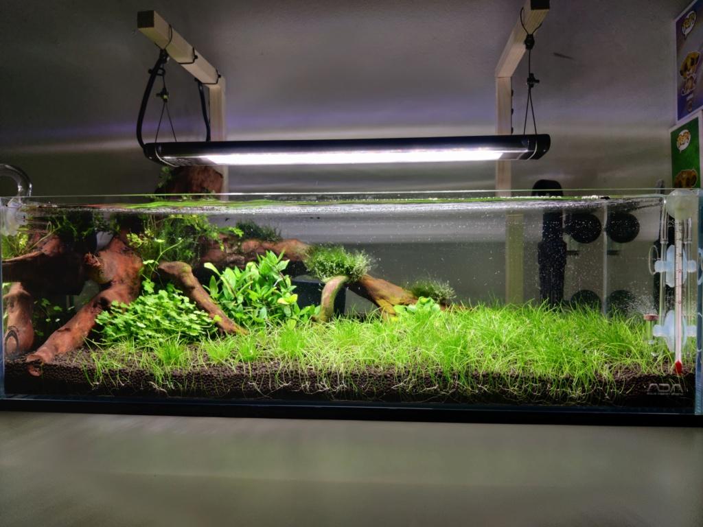 Ada cube garden 60F Drystart Img_2080